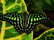 Jardin aux papillons - Jardin aux papillons